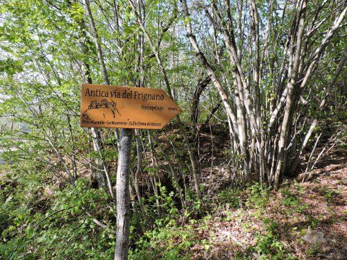 Via vecchia del Pelago